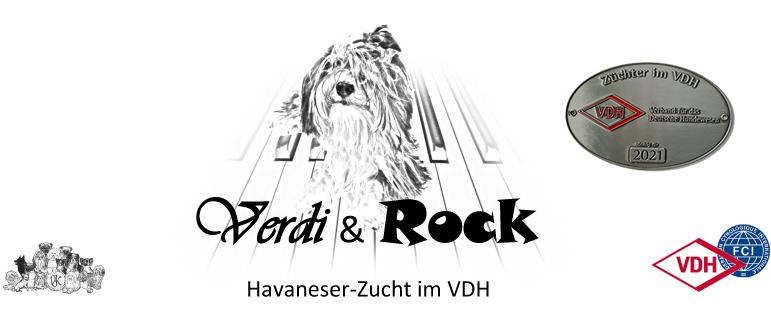 Havaneser von Verdi & Rock
